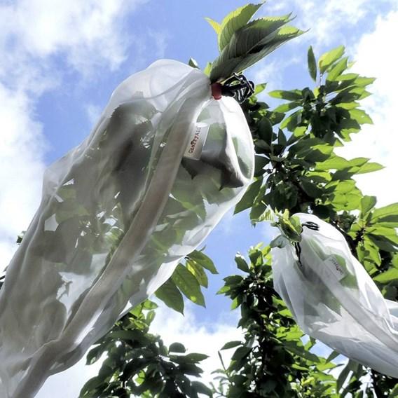 Cherry Aid® Fruit Tree Sleeves