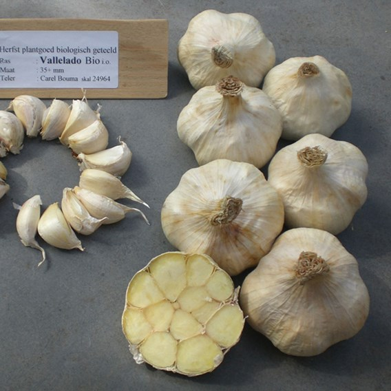 Garlic (Organic) - Vallelado