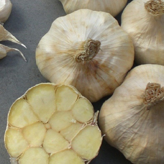 Garlic (Organic) - Messidor