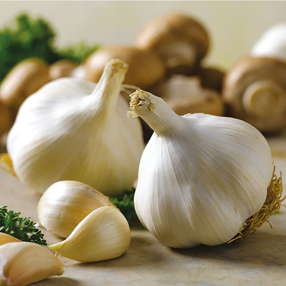 Garlic Bulbs - Solent Wight