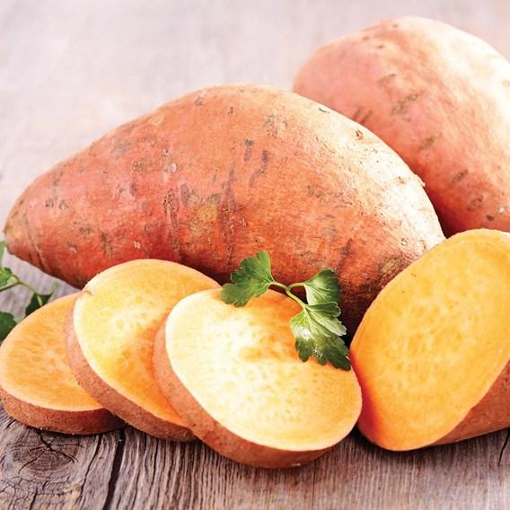 Sweet Potato - Beauregard