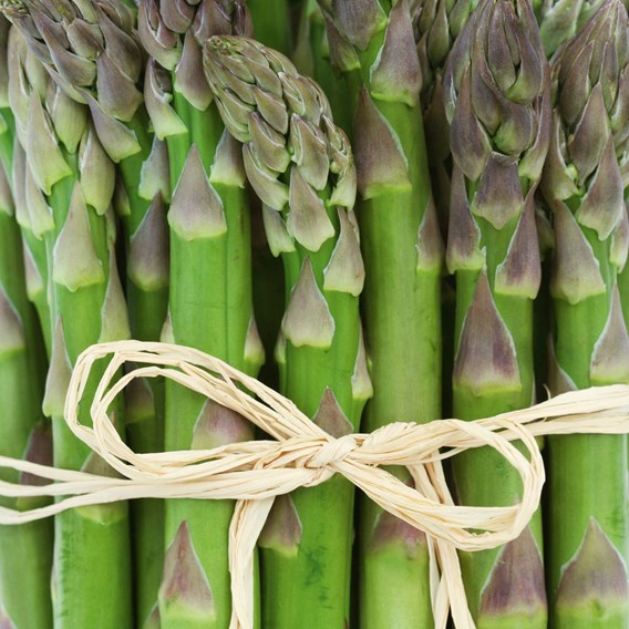 Asparagus Crowns - Gijnlim