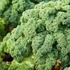 Kale Reflex (6) P9