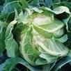 Keep Cropping Cauliflower Sapporo - 6x9cm