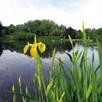 Perfecr by Ponds Mix