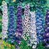 Delphinium Seeds - Pacific Giants Mixed