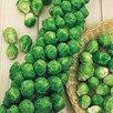 Brussels Sprout Seeds - Bedford