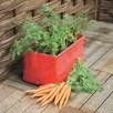 Carrot Planters X 2