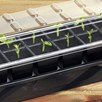 12 Cell Self-Watering Seed Success Kit (2 Kits)