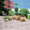 Vintage Herb Planters (Pack of 2)