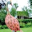 Peacock Reflecting