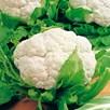 Cauliflower Flora Blanca