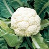 Cauliflower Goodman