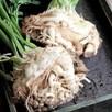 Celeriac Seeds - Prinz