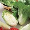 Chicory Sugar Loaf
