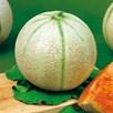 Melon Ambrosia
