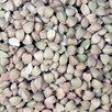 Sprouting - Buckwheat 500G