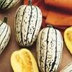 Squash & Pumpkin Delicata Cornells Bush