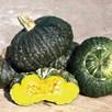Squash & Pumpkin Marina Di Chioggia
