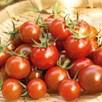 Tomato Zuckertraube