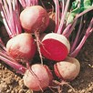 Beetroot Saver Package
