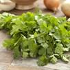 Herb Seeds - Coriander 'Slobolt'