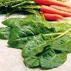 Spinach Perpetual (10) Organic