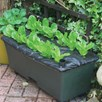 Earthbox 56 Litre Planter 2 X Mulch Covers Black