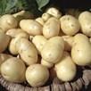 Seed Potato Organic Nicola 1kg