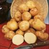 Seed Potato Organic Cara 1kg