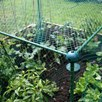 BUTTERFLY PROTECTION CAGE 250  X 125 X 125