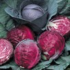 Cabbage Red Drumhead (10) Organic