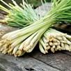 Lemon Grass  (3 ) P9's