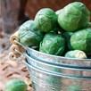 Brussels Sprout Crispus (22)