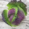 Cabbage Savoy Seeds - January King 3