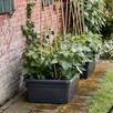 Super Movable Garden