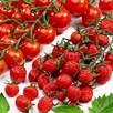 Tomato Plants - Sugar Plum Raisin F1