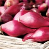 Onion Set (Organic) - Red Baron