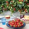 Strawberry Plants - F1 Delizz