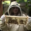 Urban Beekeeping and Honey Craft Beer Tasting for Two