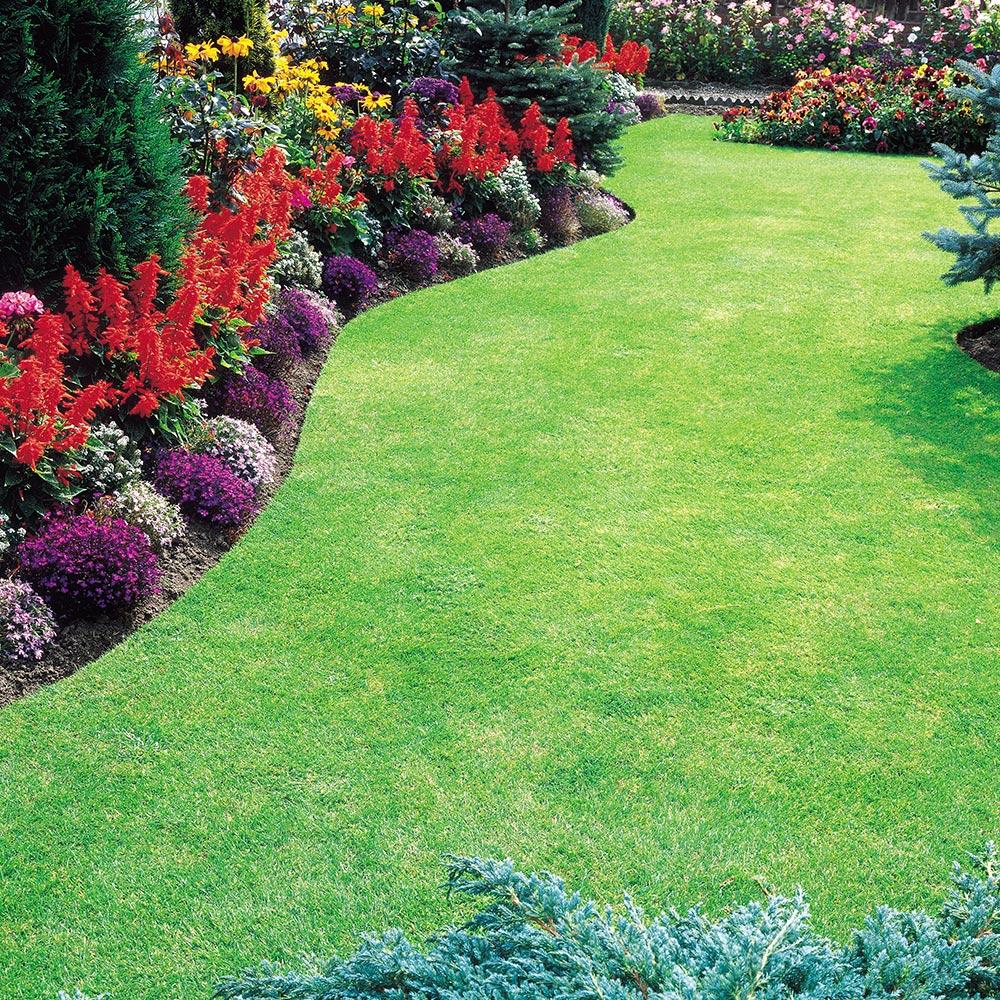 dobies premium lawn seed | organic gardening catalogue